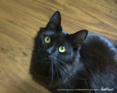 Simon, with those big eyes, long whiskers and tall pointy ears.