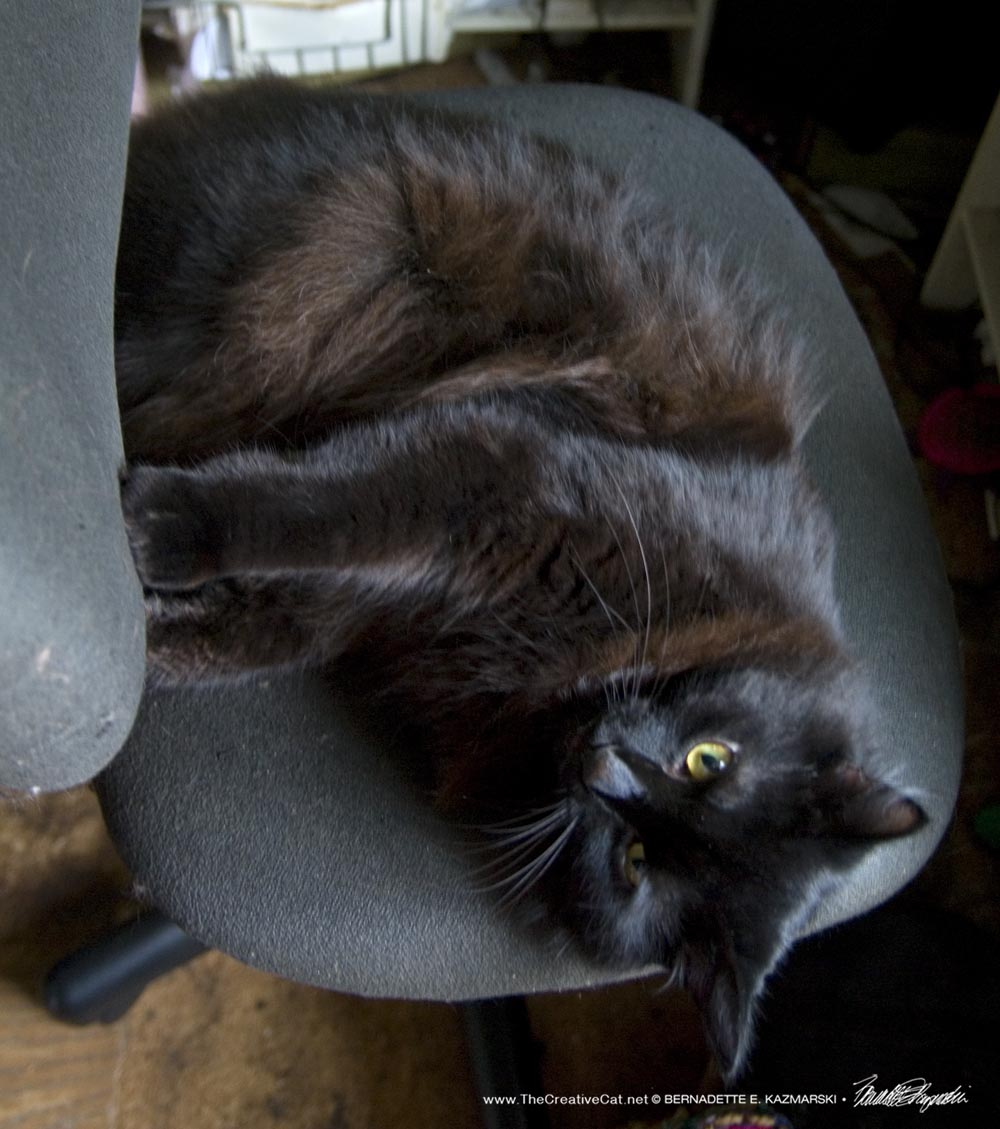Basil takes my chair and keeps it because he's so cute.