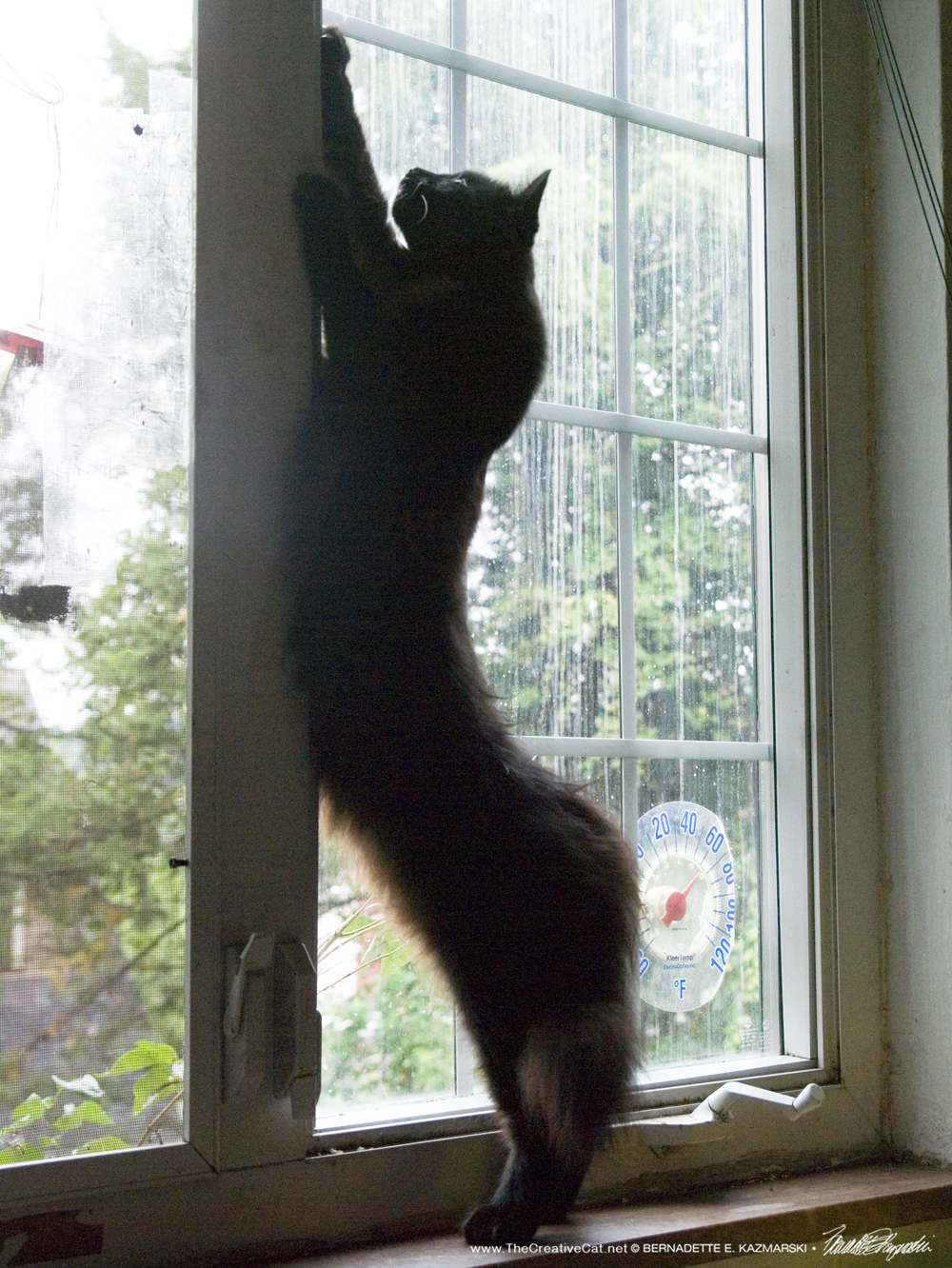 """Hamlet says, """"Come here, little birdie, I just want to play!"""" With the tree and lilac missing the birds don't have a sheltered place to land so they line up along the top of the casement window. He is one long slender cat."""