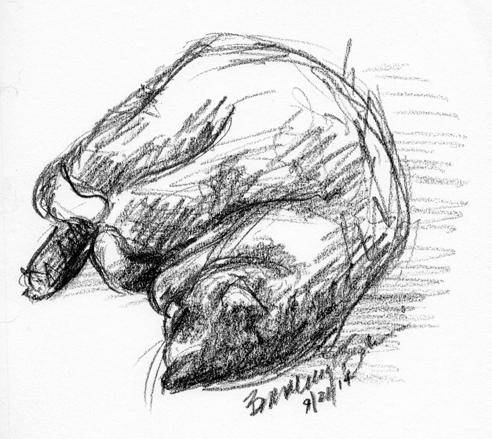 charcoal sketch of cat on bed