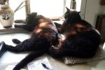 Mimi and Mewsette rest in dappled light in my studio.