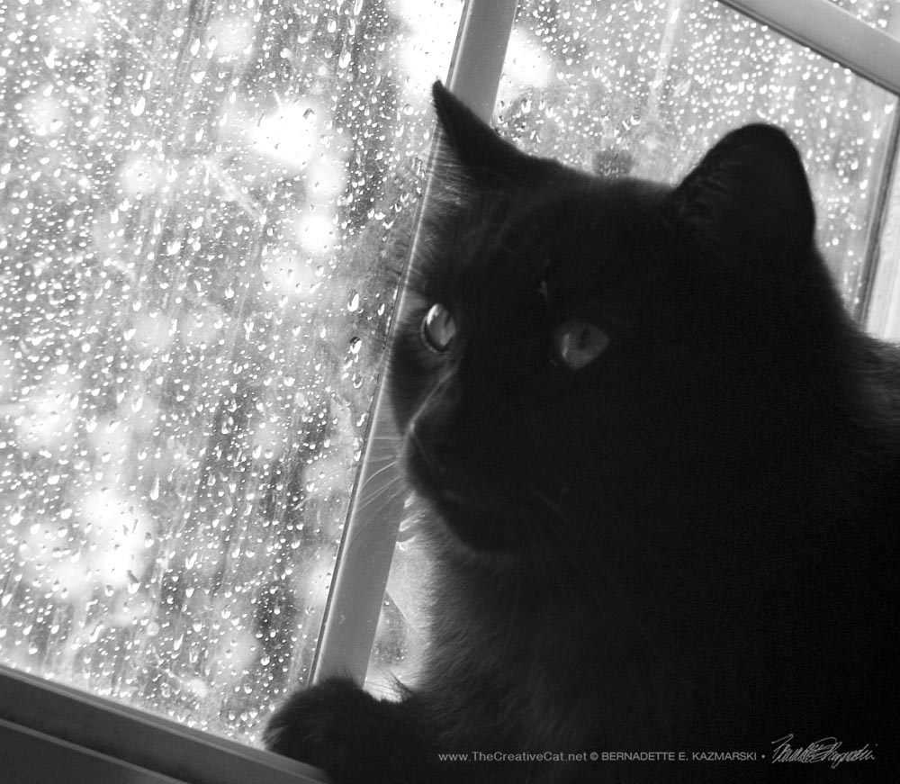 Hamlet intently watches the birds in the rain, the original black and white.