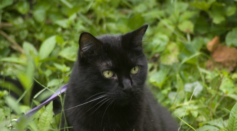 Mewsette in greens, looking lovely.