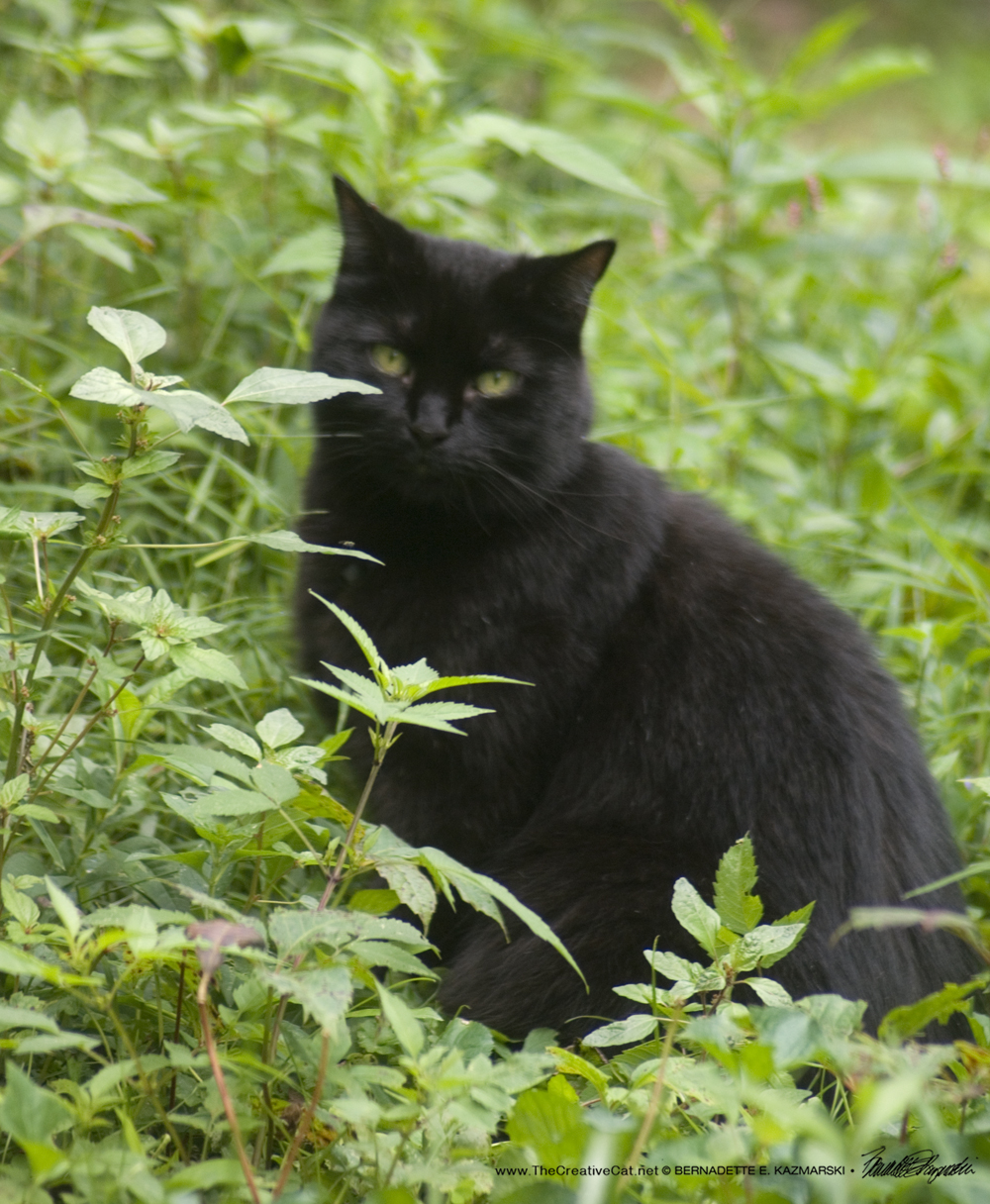 Mewsette in greens, pretending to be wild.