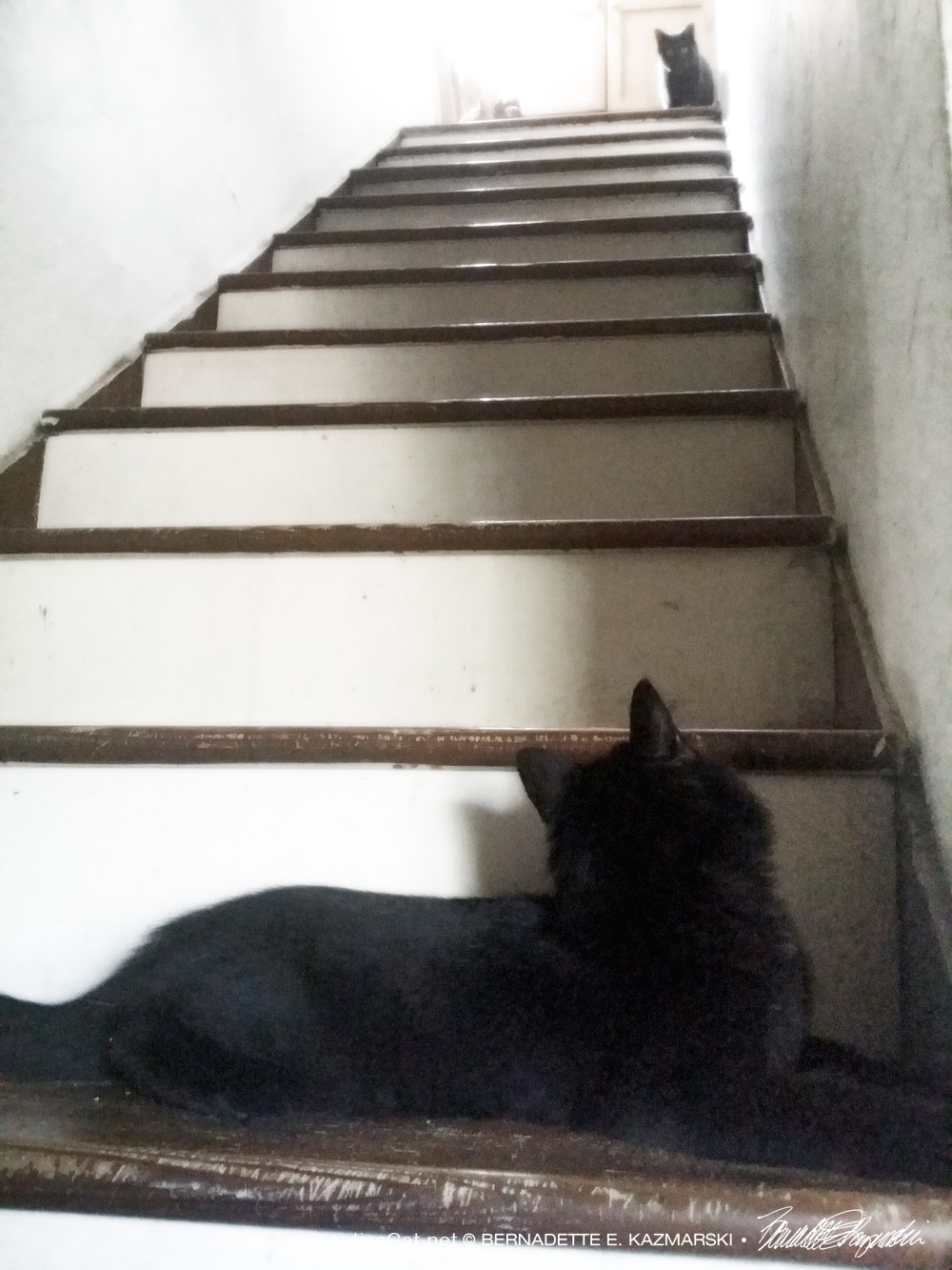 two black cats on stairs
