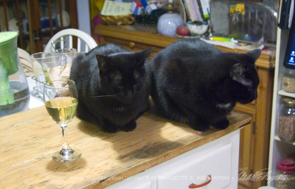 two black cats with wine