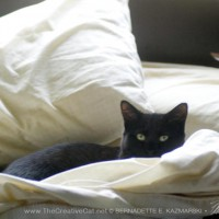 black cat in bed