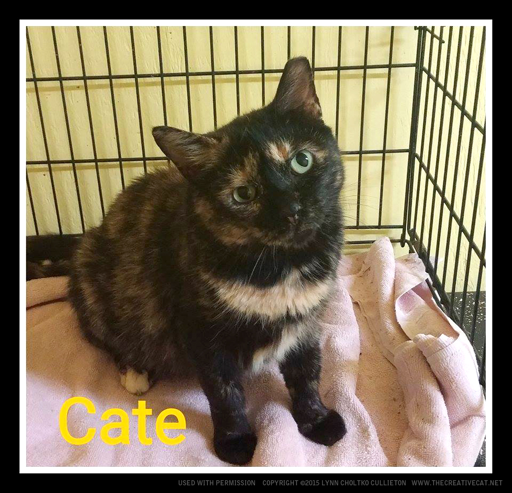 Cate is ready to go home with you!