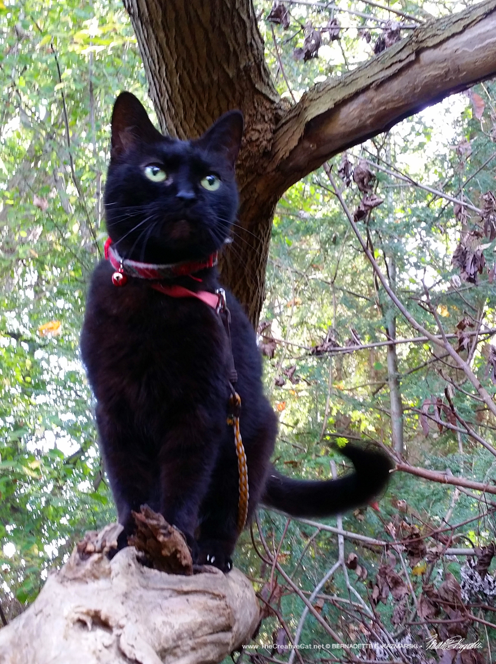 Little Tree Panther.