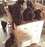 Nine cats in the kitchen!