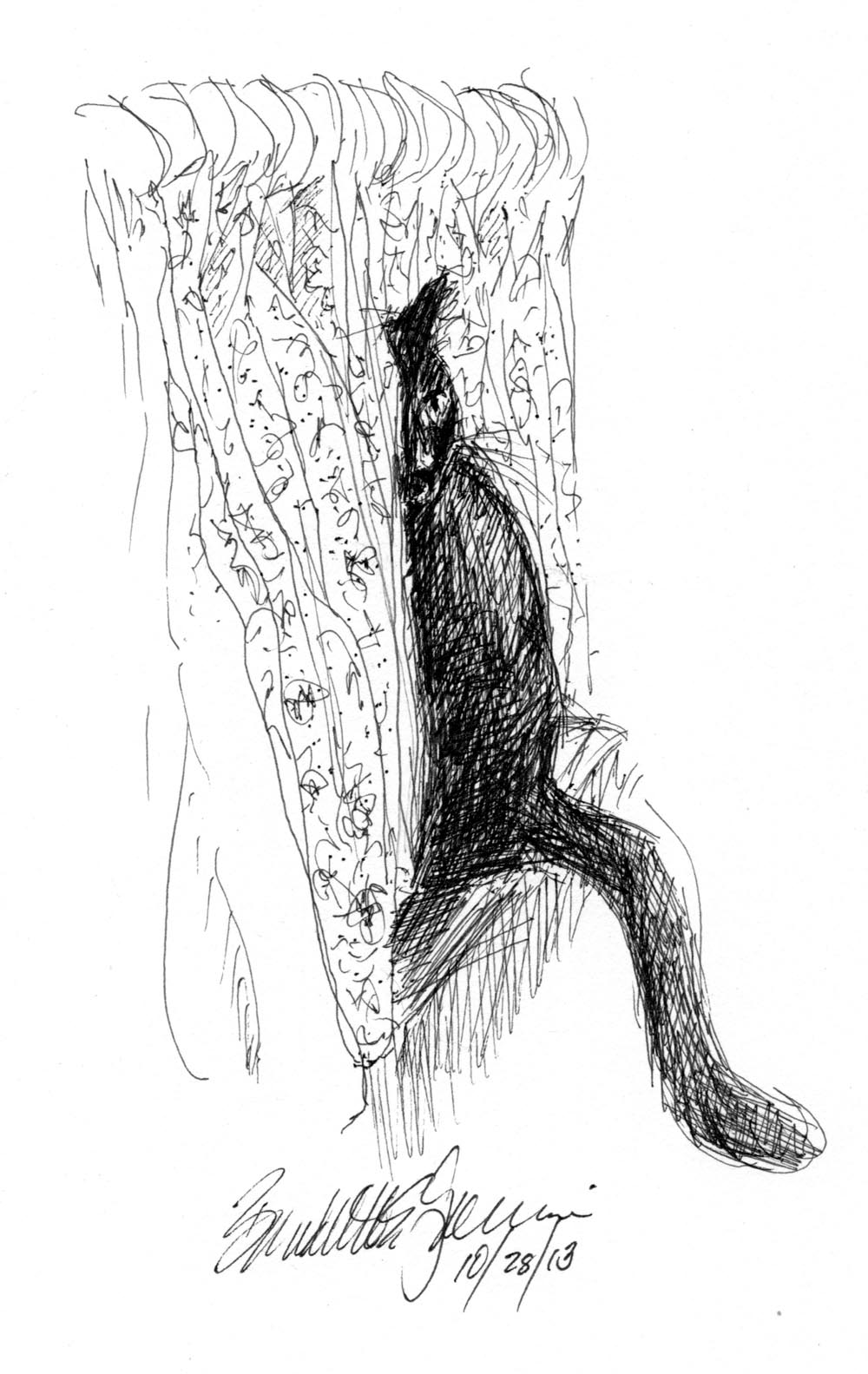 ink sketch of cat with curtains