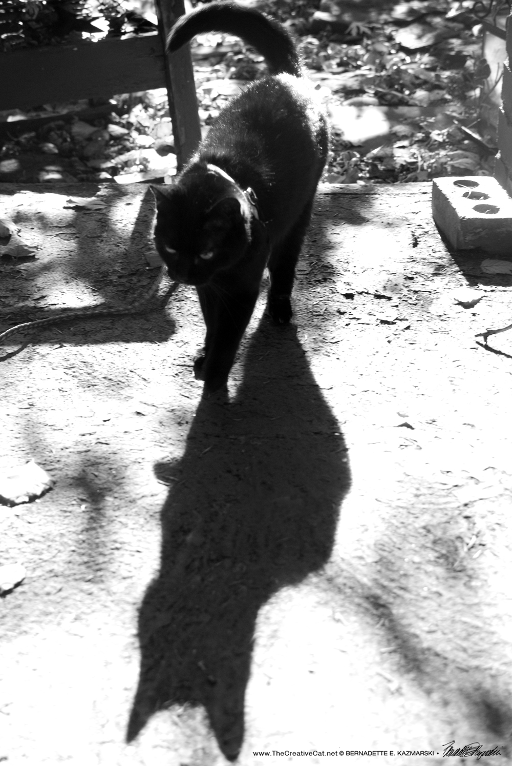 Walking Into Myself. Mimi in a philosophical mood.