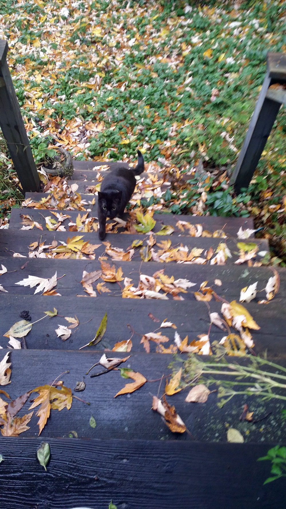 black cat running up steps