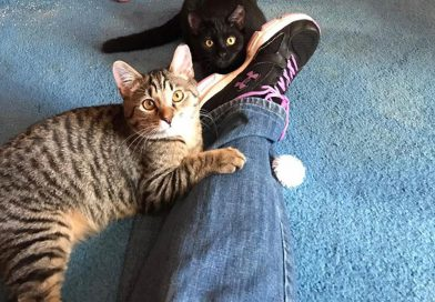 Cats for Adoption: Suki and Obi, the Purr-fect Pair!