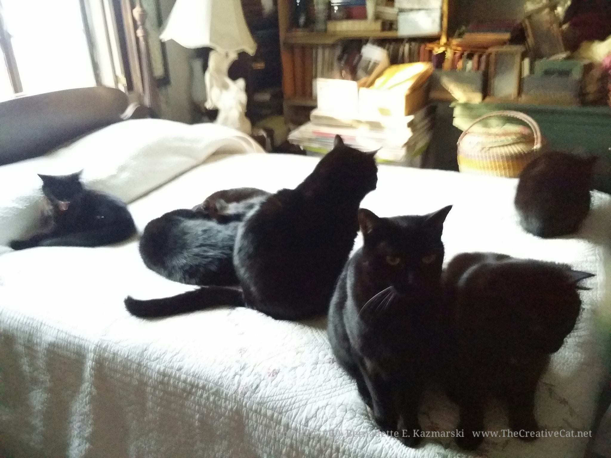 Seven black cats on the bed!
