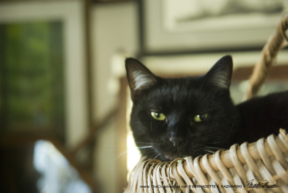 Bean in the Basket