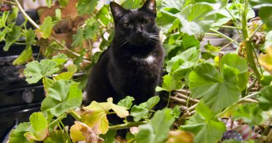 Living Green With Pets: Bringing Plants Indoors