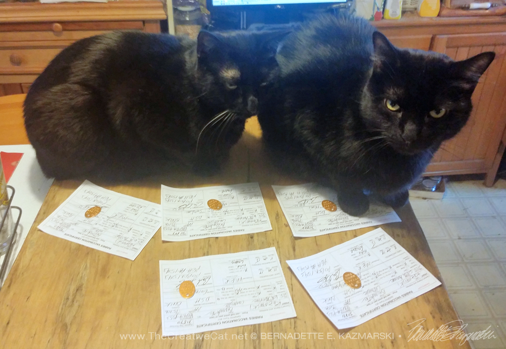 two black cats with rabies certificates
