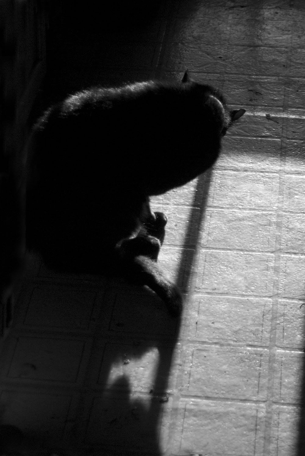 black and white photo of cat bathing Daily Cat Photo