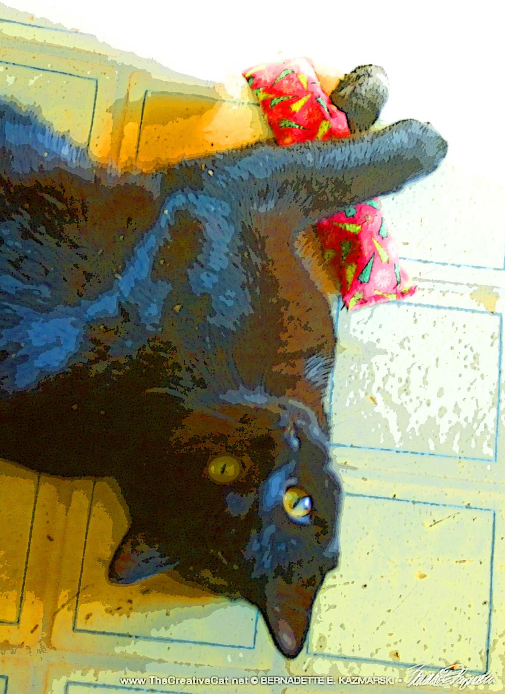 black cat with catnip toy Daily Cat Photo