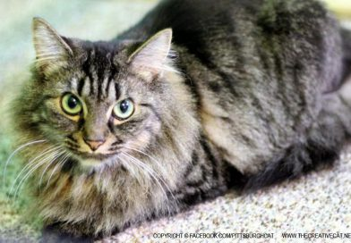 Cats for Adoption: Three From Brookline, Adoptions Sponsored and Food for a Year!