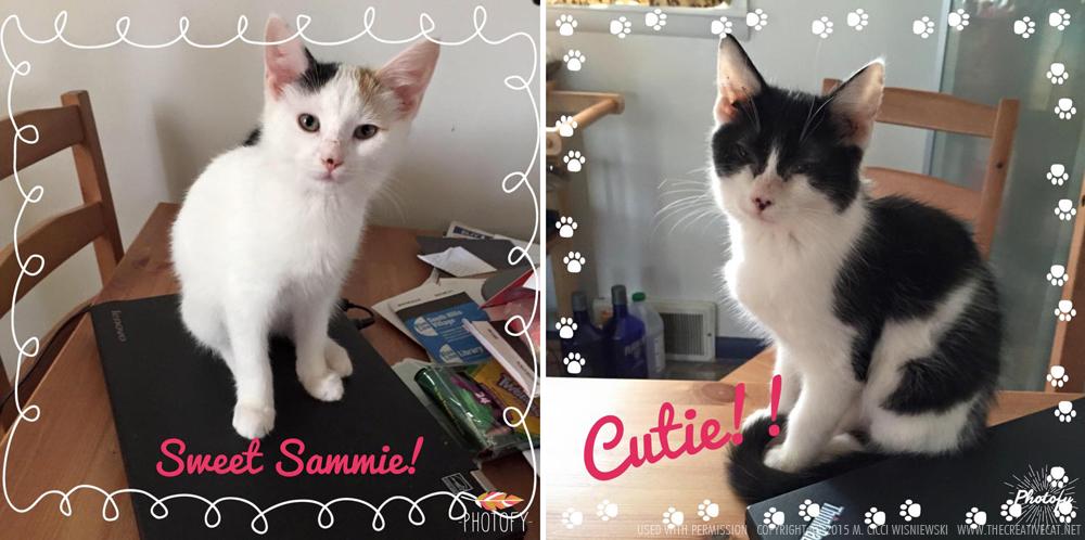 Sammie and Cutie, two rescued kittens, adopt two kittens