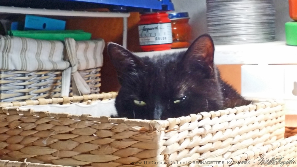Mimi peeks out of the basket. black cat in basket