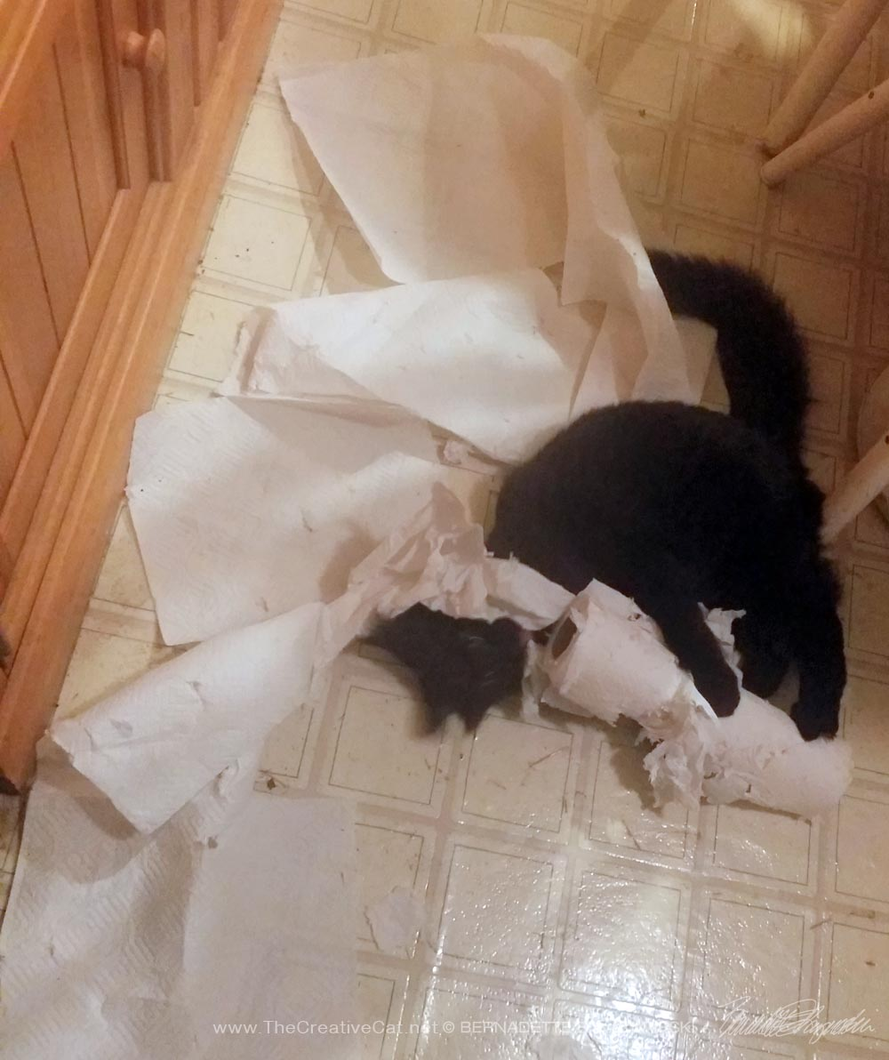 black kitten with paper towels