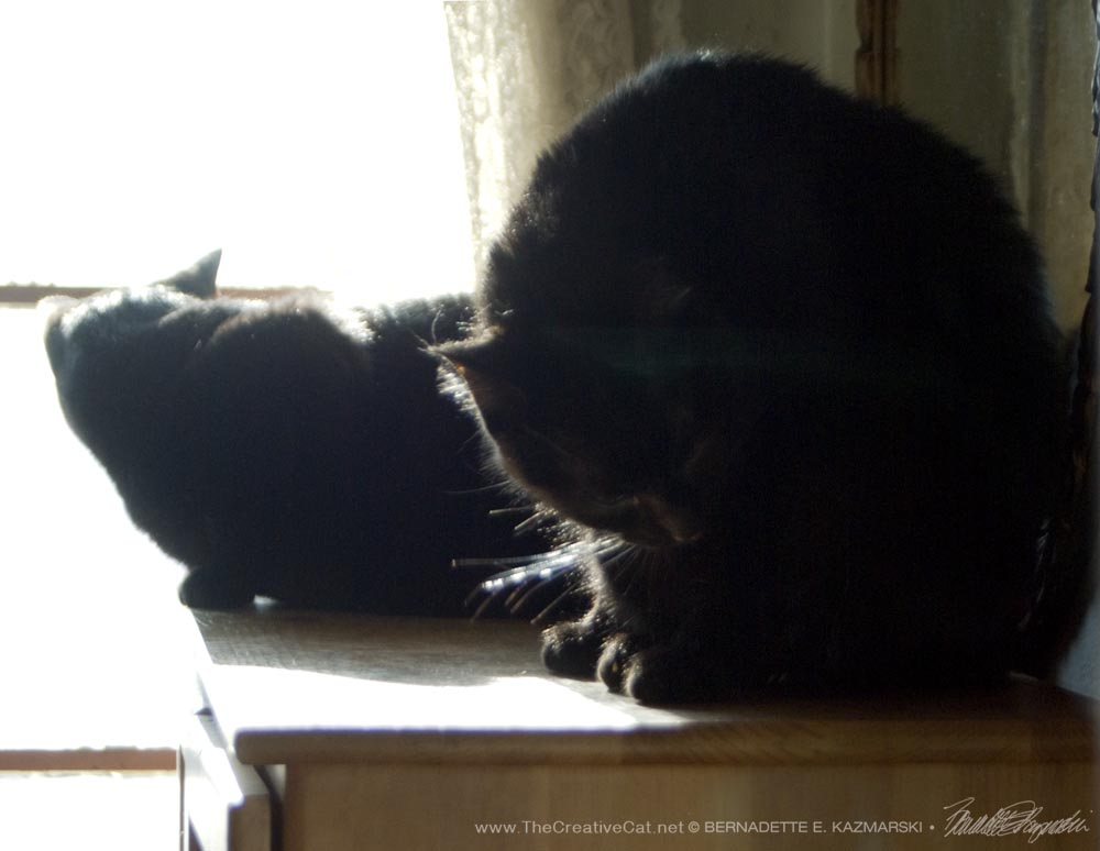 Sunshine attends to a speck of something on his hip. two black cats