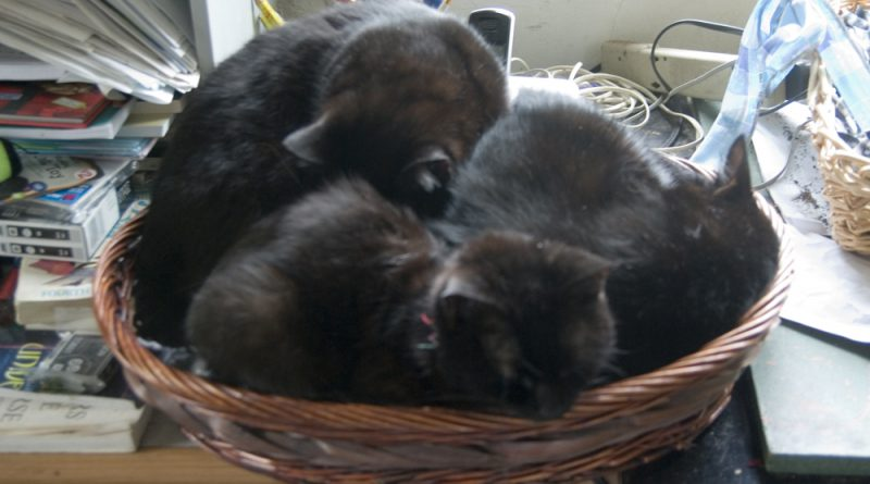 A basket of cats.