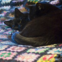 two black cats on afghan