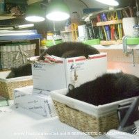 cats sleeping in baskets