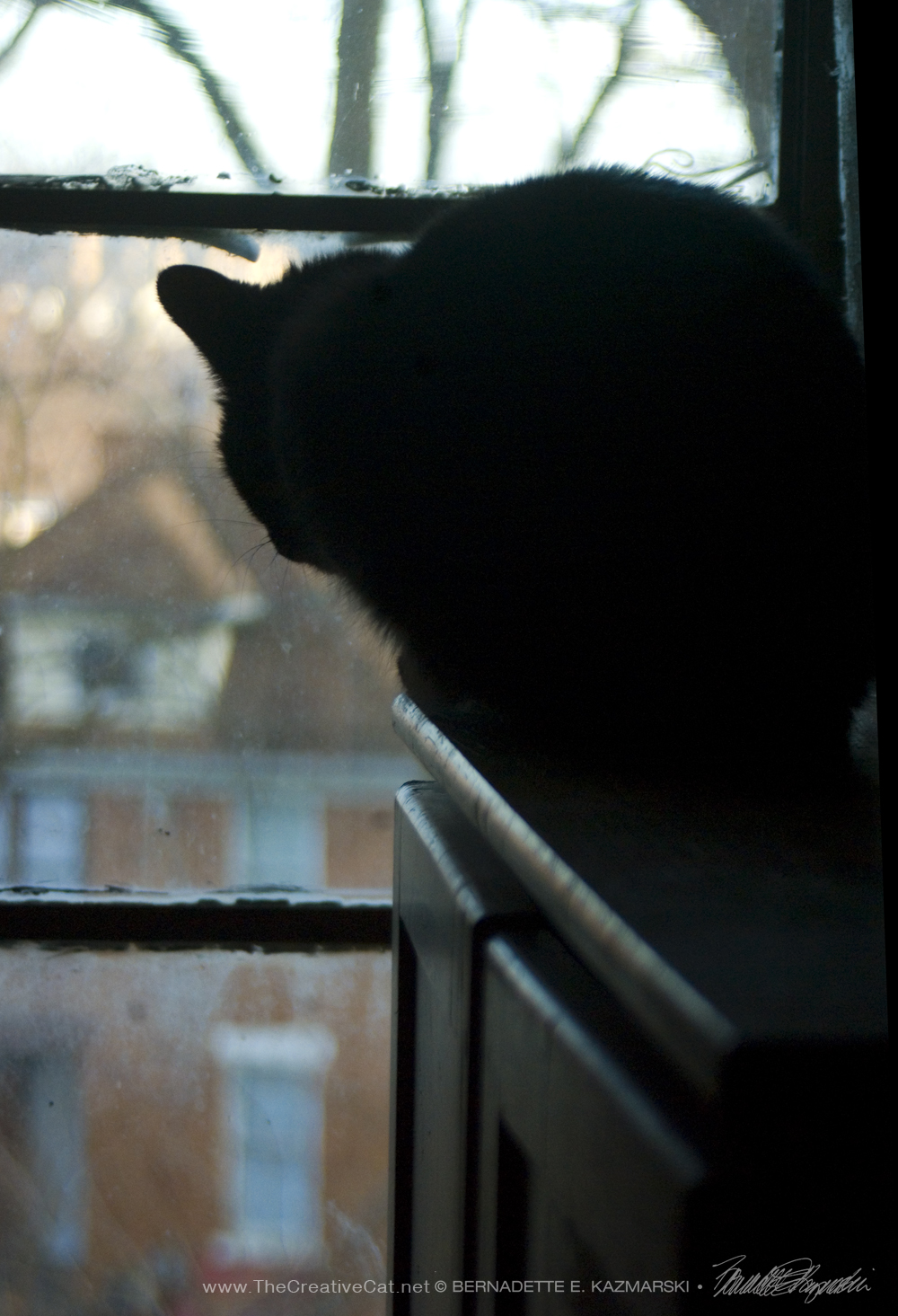 black cat silhouette at window