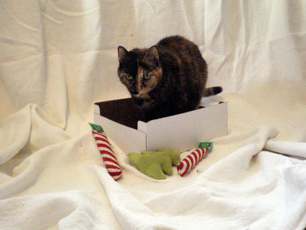 tortoiseshell cat in box