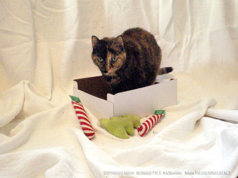 tortoiseshell cat with christmas toys