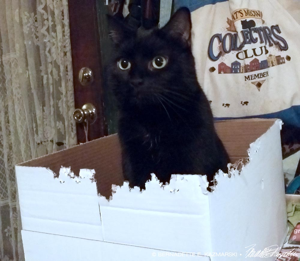 daily photo a new box and a happening the creative cat. Black Bedroom Furniture Sets. Home Design Ideas