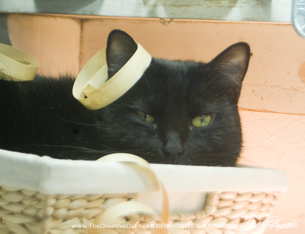 black cat with decorations.