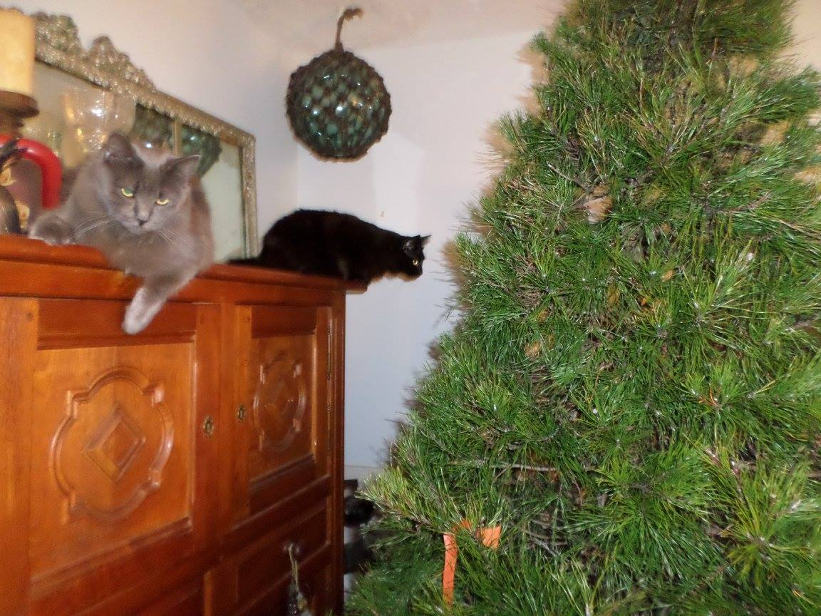 Simon and Theo and their first Christmas tree.