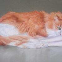 portrait of orange and white cat