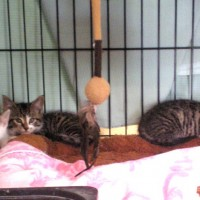 kittens in cage