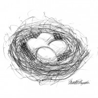 pencil sketch of bird&#039;s nest