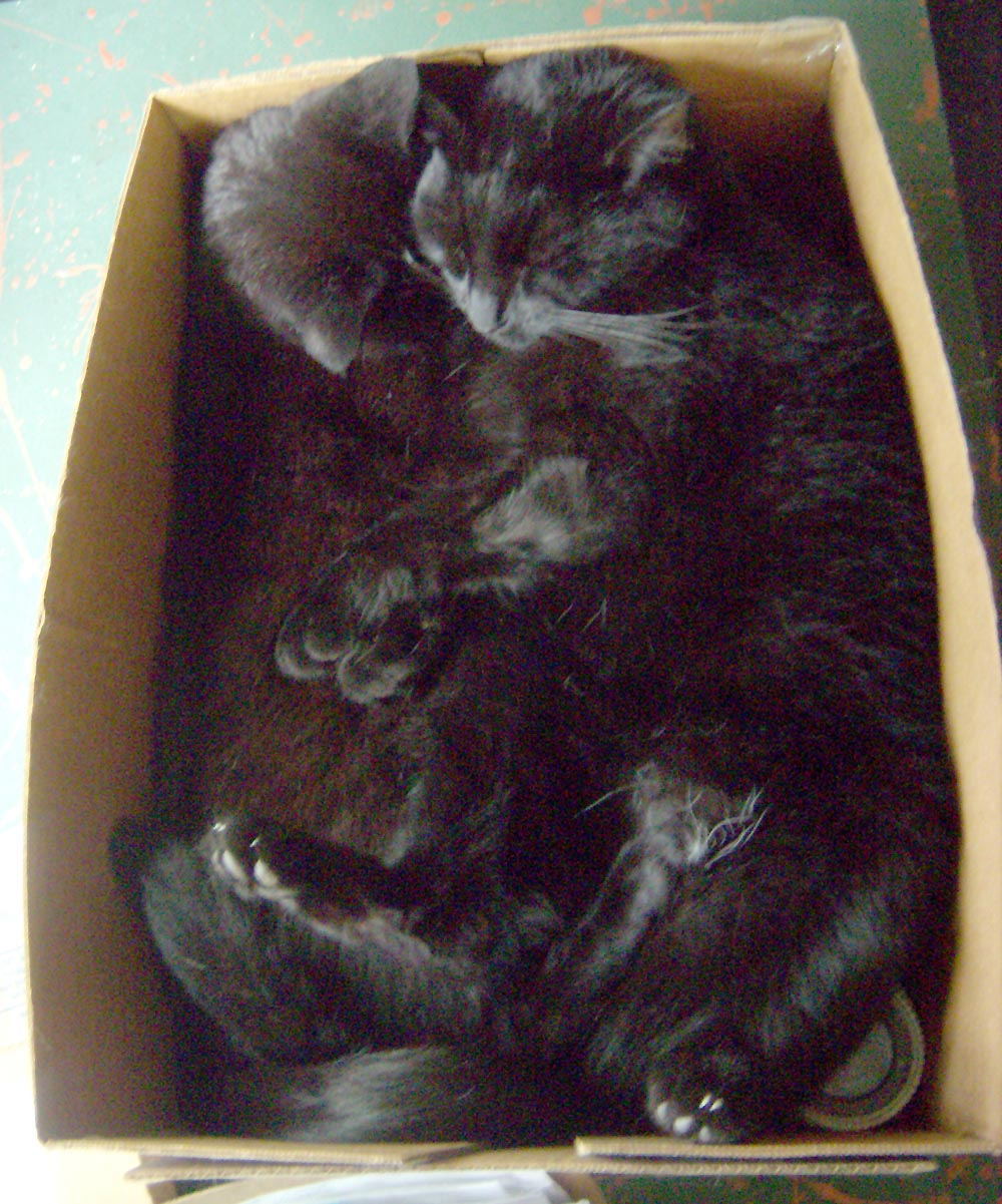 two black cats in box