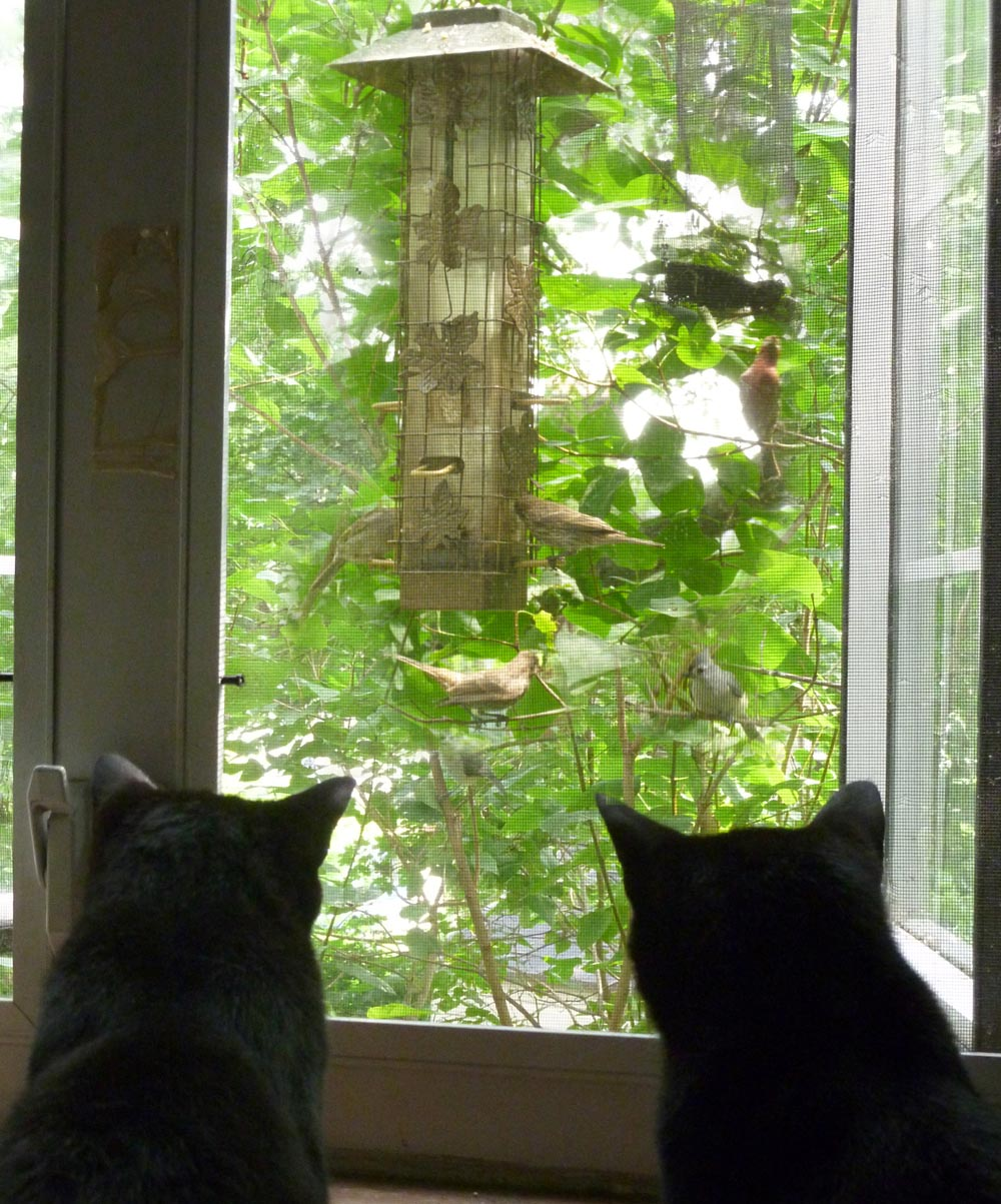 Two cat silhouettes looking at feeder