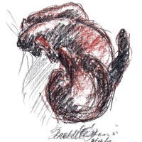 conte sketch of cat rolling on back