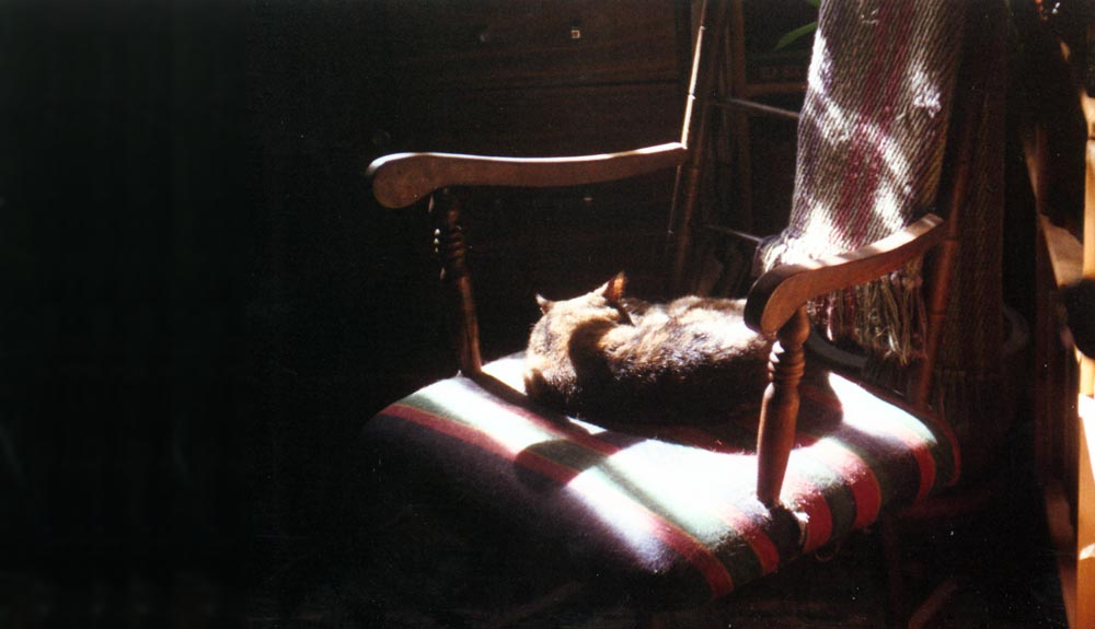 tortoiseshell cat on striped rocker