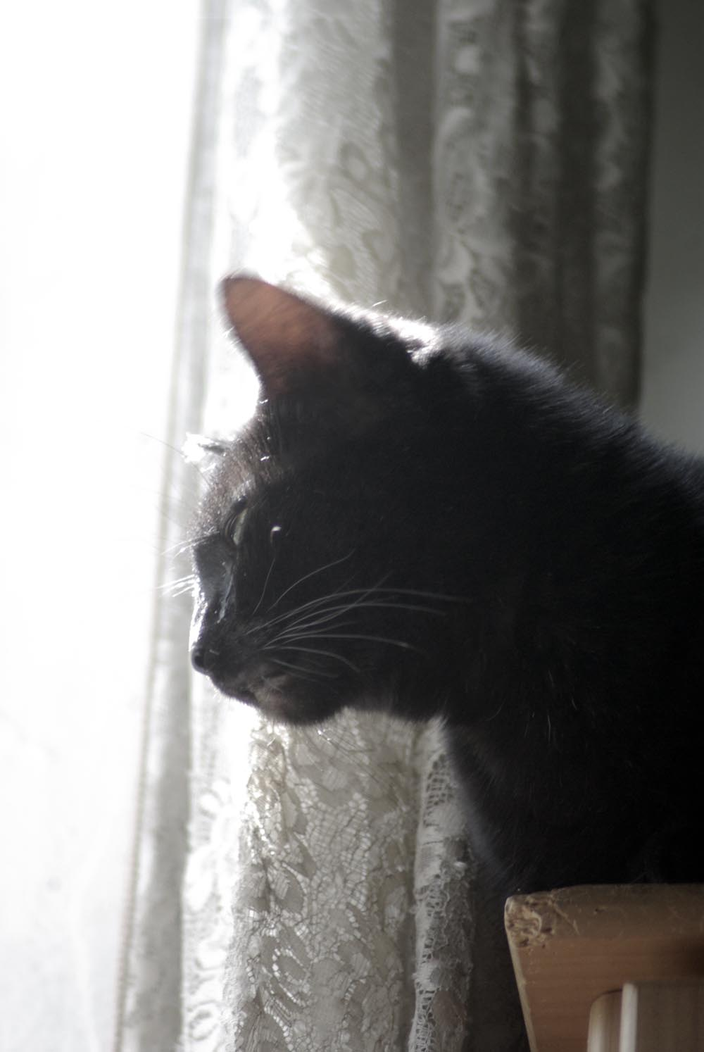 black cat at sunny window