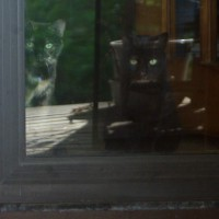two cats inside back door