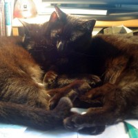 two black cats cuddling