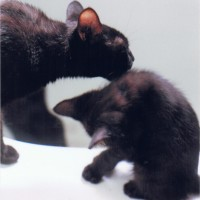 black cat washing black kitten