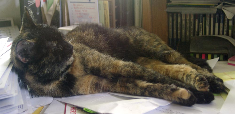 tortoiseshell cat sleeping on desk